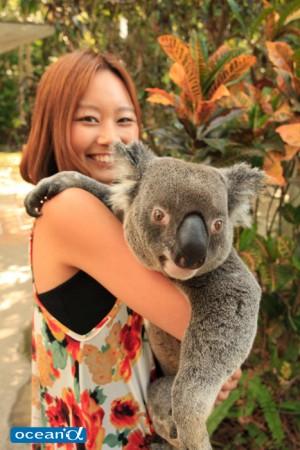 オーストラリアのコアラ(撮影:越智隆治)
