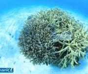 次の記事: サンゴ礁の消失による損害は年間に推定2兆円以上。サンゴを守る