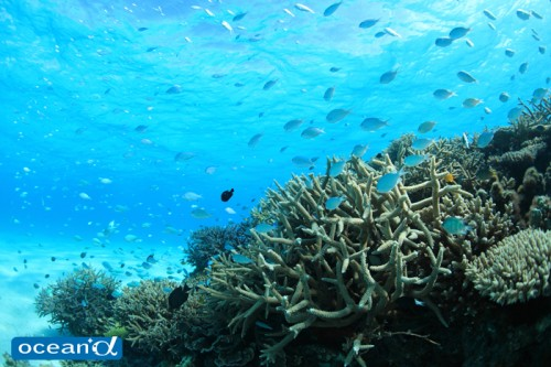 宮古島の青い海とサンゴ(撮影:越智隆治)