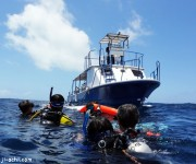 前の記事: パラオのダイビングショップが採っている潜水事故時の対応策とは