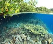 次の記事: ラジャアンパットの海はワイド撮影が楽しいポイントが豊富!