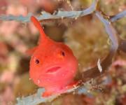 次の記事: ジオサイト・鳥取の海で「中村卓哉さんフォトレクチャー」開催!