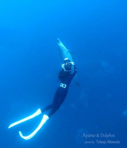フォースエレメントのウェットスーツを着てイルカ撮影中の様子(水中モデル:鈴木あやの 撮影:秋本哲志)