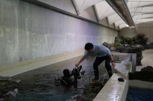 鴨川シーワールドの水槽に入る越智隆治