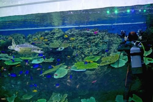 鴨川シーワールドを撮影中の越智隆治