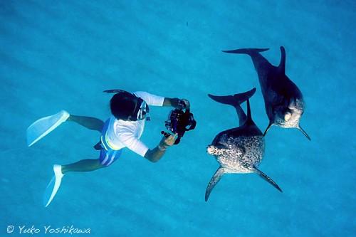 バハマのドルフィンクルーズのイルカ