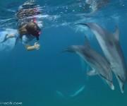 前の記事: クジラ、シロイルカ、イルカと水中で遊ぼう! ~横浜八景島シー