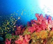 次の記事: 意外と潜っている!? 世界に誇る日本の海