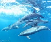 次の記事: イルカの群れを2時間貸切状態!バハマドルフィンクルーズレポー