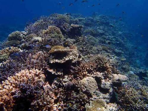 西表島のサンゴ礁(座安佑奈)