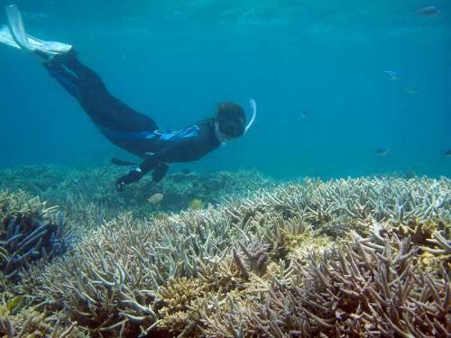 海中のサンゴ礁と座安佑奈