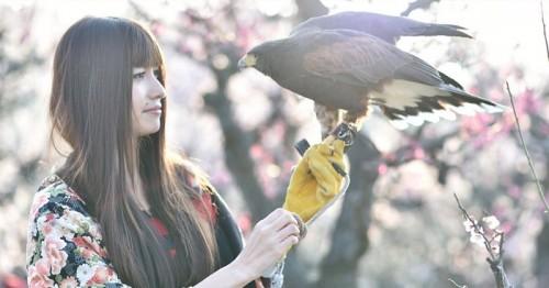 猛禽アイドル稲咲アンナ