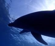 前の記事: イルカの群れを20分貸切状態!御蔵島ツアーレポート