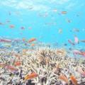 宮古島の八重干瀬「コラビジ」(撮影:むらいさち)