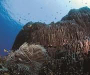 次の記事: 中村卓哉写真展「わすれたくない海のこと 辺野古・大浦湾の山|