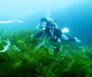 次の記事: 緑色のアワビ?三陸の海で行われる稚貝の放流