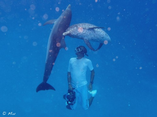 バハマのドルフィンクルーズ、イルカと泳ぐ越智隆治