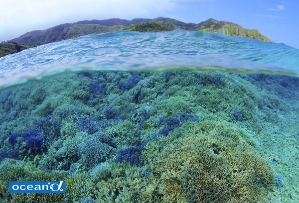 西表島のサンゴ(撮影:中村卓哉)