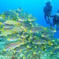 ニューカレドニアの魚の群れ(撮影:越智隆治)