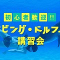 スキンダイビング・ドルフィンスイム講習会バナー