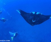 次の記事: タイのシミラン諸島で、マンタ撮影中にエア0