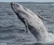 前の記事: 日本でオススメのホエールウォッチング3エリア~イルカが休みの