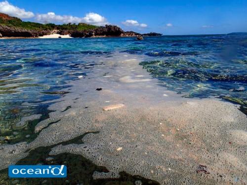 潮の満引きとサンゴ(撮影:座安佑奈)