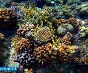 次の記事: サンゴは動物?植物?それとも石?