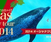 次の記事: イルカの水槽前で寝よう!2014クリスマスパーティーツアー受