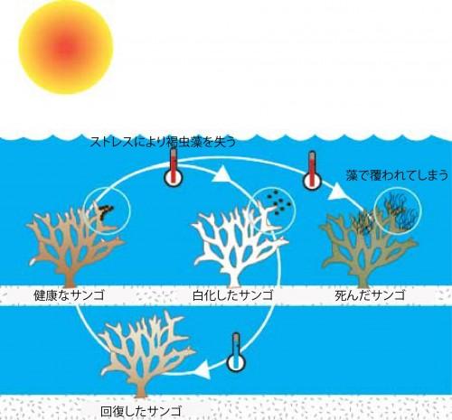 サンゴの白化の図