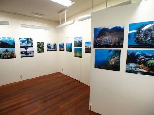 辺野古の海写真展(撮影:寺山英樹)