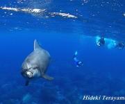 次の記事: イルカはサーフィンが得意?台風の時にイルカは何をしているのか