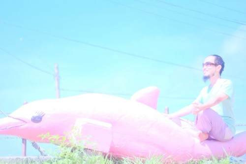 御蔵島のピンクのイルカといぬたく