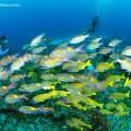 魚の群れ(撮影:大川拓哉)