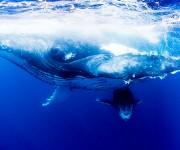 次の記事: 写真家・岡田裕介が見た2年目のトンガとザトウクジラ