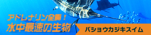 trip-sailfish-313px