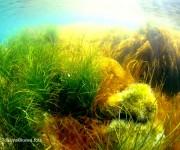 前の記事: 積丹のウニと藻場を守れ!漁師とダイバーが手を組んだ再生プロジ