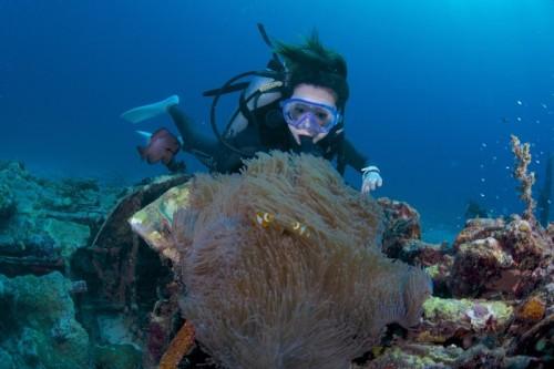 パプアニューギニア、リセナンのカクレクマノミ(撮影:中村卓哉)