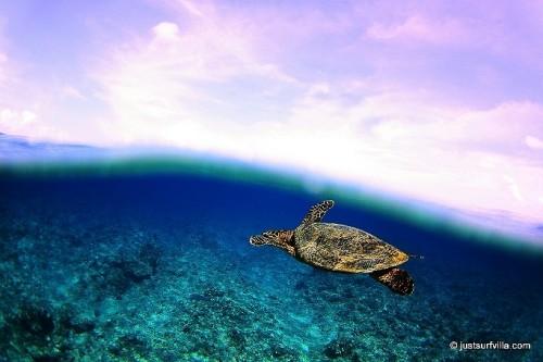 モルディブ、ヒマフシ島の海(提供:高井章太郎)