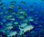 前の記事: 15万匹のイレズミフエダイを撮るために生まれた?ペリリュー島