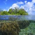 パプアニューギニアの海・半水面(撮影:中村卓哉)
