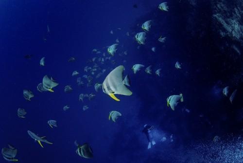 パプアニューギニアの海(撮影:中村卓哉)