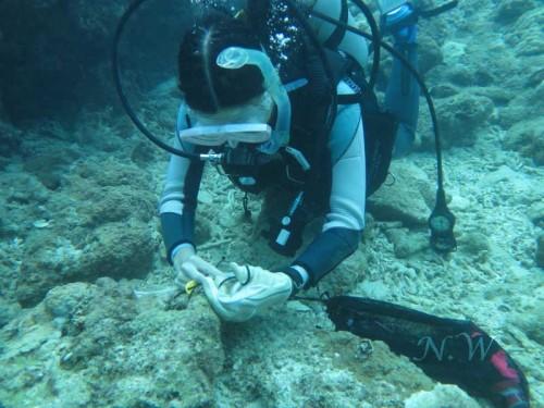 サンゴの病気に関する調査風景(提供:和田直久)