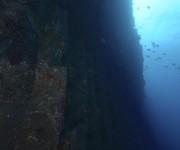 次の記事: 伊豆大島で水中ボルダリングに挑戦!