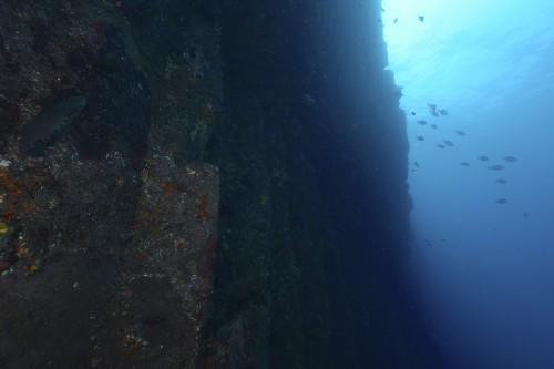 伊豆大島のジオダイブ(撮影:中村卓哉)