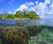 前の記事: 昼間は無料で潜り放題!極楽ハウスリーフに囲まれたリセナン島