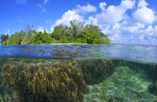 リセナン島、ハウスリーフの半水面(撮影:中村卓哉)
