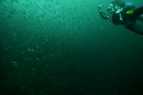 透明度の悪い神子元の海(撮影:寺山英樹)