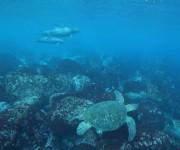前の記事: イルカだけじゃない!御蔵島で始まるウミガメ調査