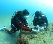 次の記事: 名物ダイビングガイドに訊く、マクロ生物の見つけ方
